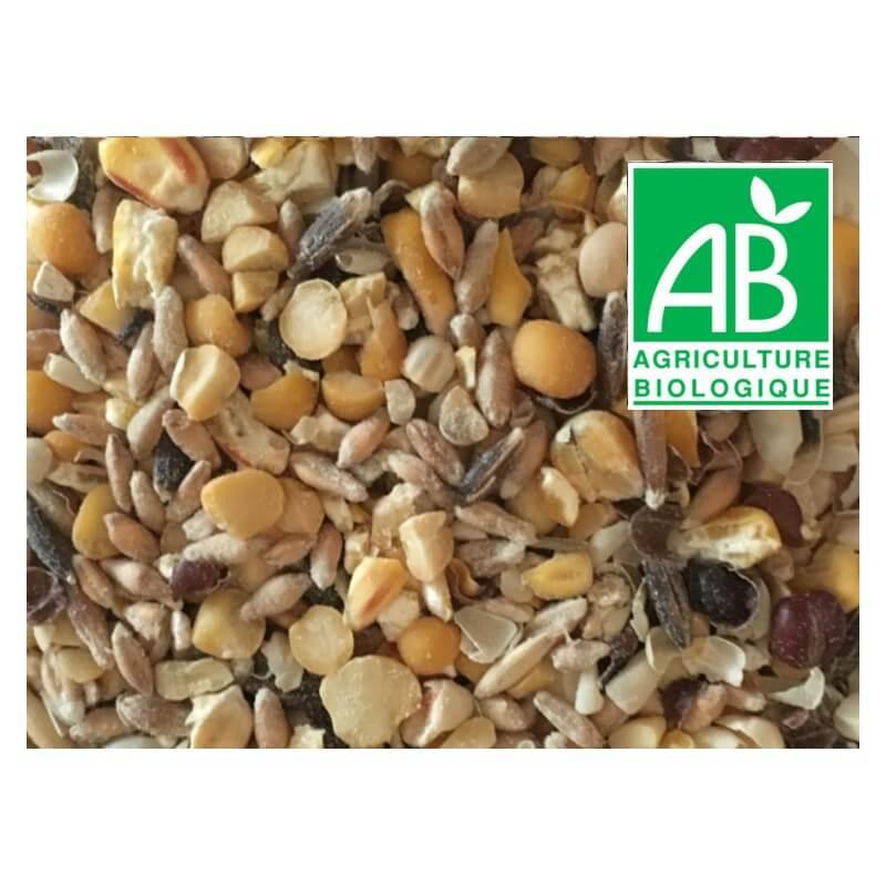 nourriture équilibrée: mélange de céréales bio pour poules pondeuses