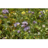 Couvert végétal pour enclos et parcs des poules et volailles en belles jachères fleuries