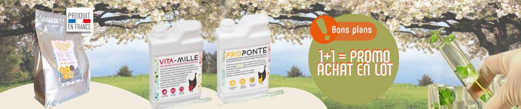 Santé et phytothérapie pour soigner la basse-cour familiale