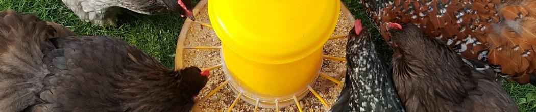 Mangeoires et abreuvoir volaille poulailler design for Abreuvoir poule maison