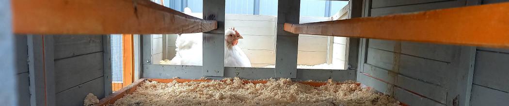 les pondoirs pratiques pour poules pondeuses poulailler design. Black Bedroom Furniture Sets. Home Design Ideas