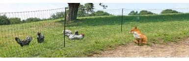 enclos poules parc poules parcours herbeux 2. Black Bedroom Furniture Sets. Home Design Ideas