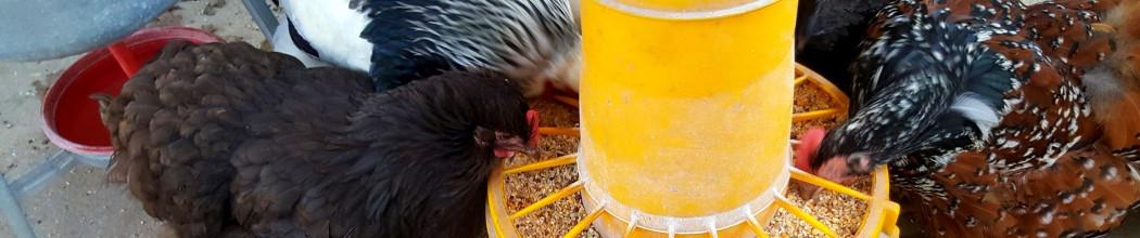 mangeoires pour volailles, plastique ou galva, toutes contenances.