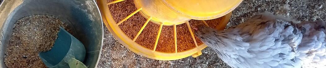Aliment pondeuse, mélanges de graines bio, granulés complets pondeuses