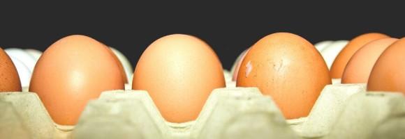 Ces œufs de poules élevées en batterie
