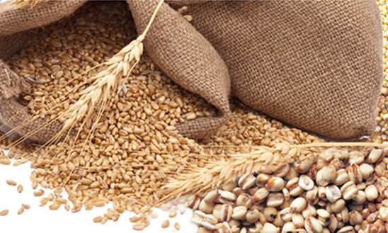 L'alimentation des poules pondeuses, des poussins etc, aliments de qualité et grains bio pour nos poules