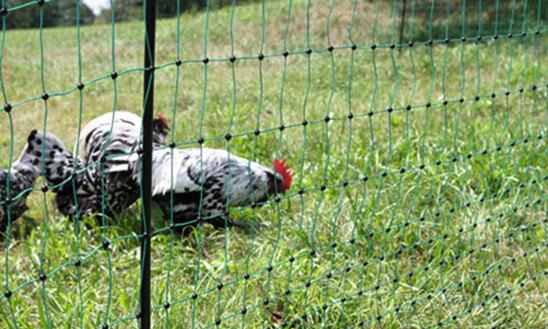 Parcs à volailles, enclos pour les poules, et volières pour agrandir mon poulailler bois