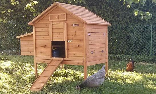 Poulaillers bois en kit chez Poulailler Design